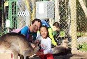 【趣味探索系列】 澳洲海豚岛自然探秘亲子营