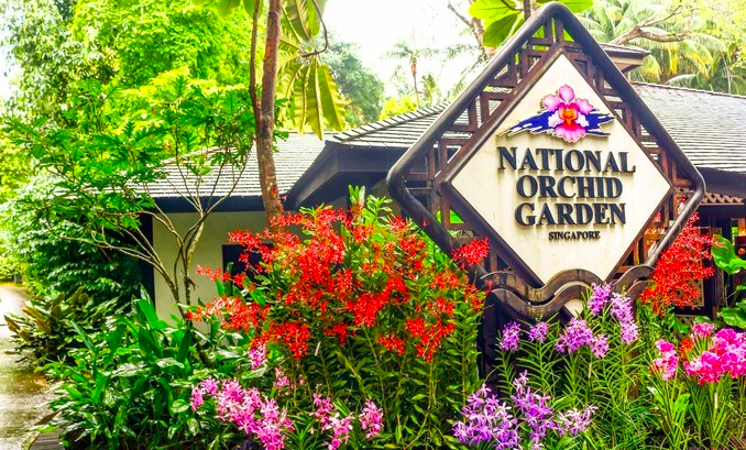 新加坡 植物园2