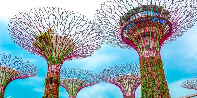 新加坡 6