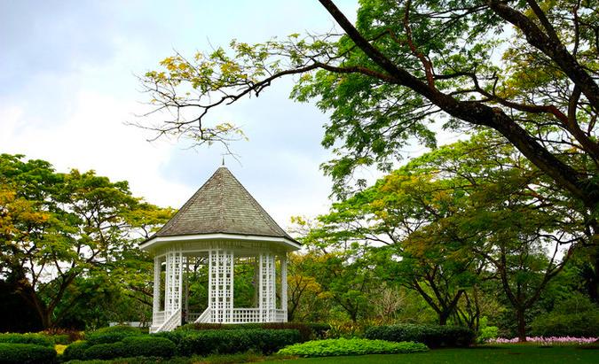 新加坡 植物园3